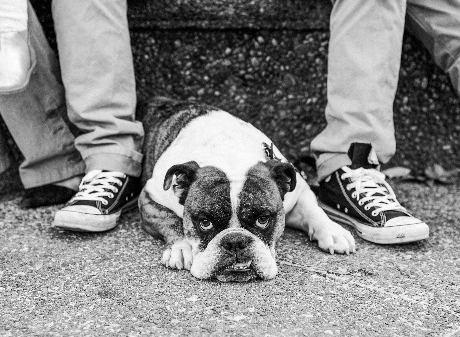 black and white film family photos, bulldog