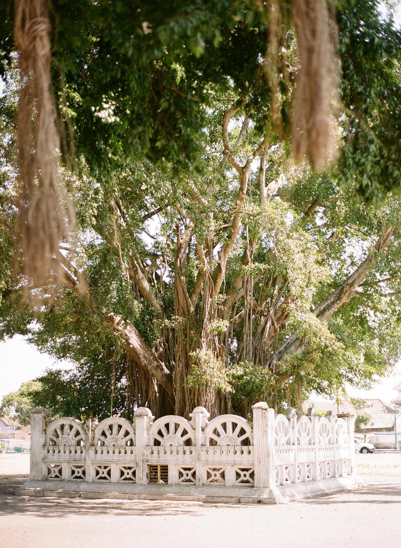 banyan tree indonesia