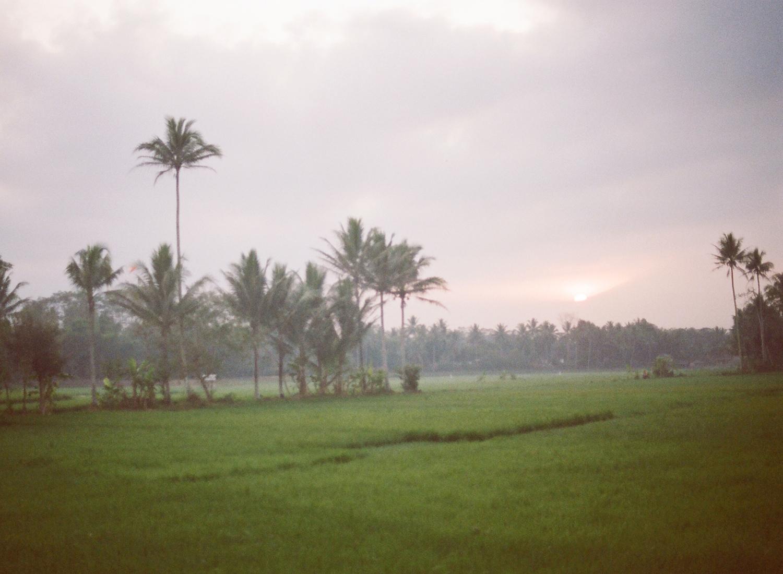 sunrise rice fields on film, Indonesia