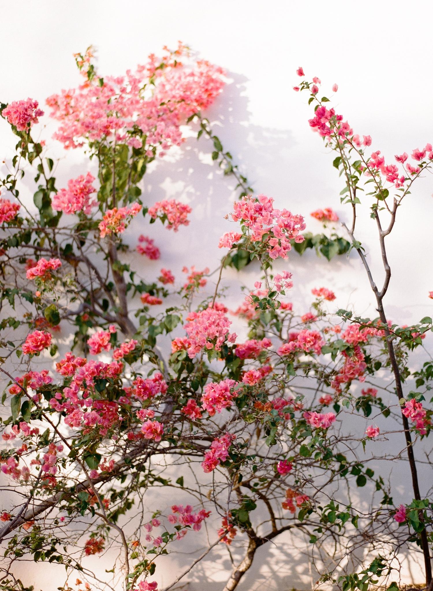 bougainvillea andaz resort destination photographer, fine art film