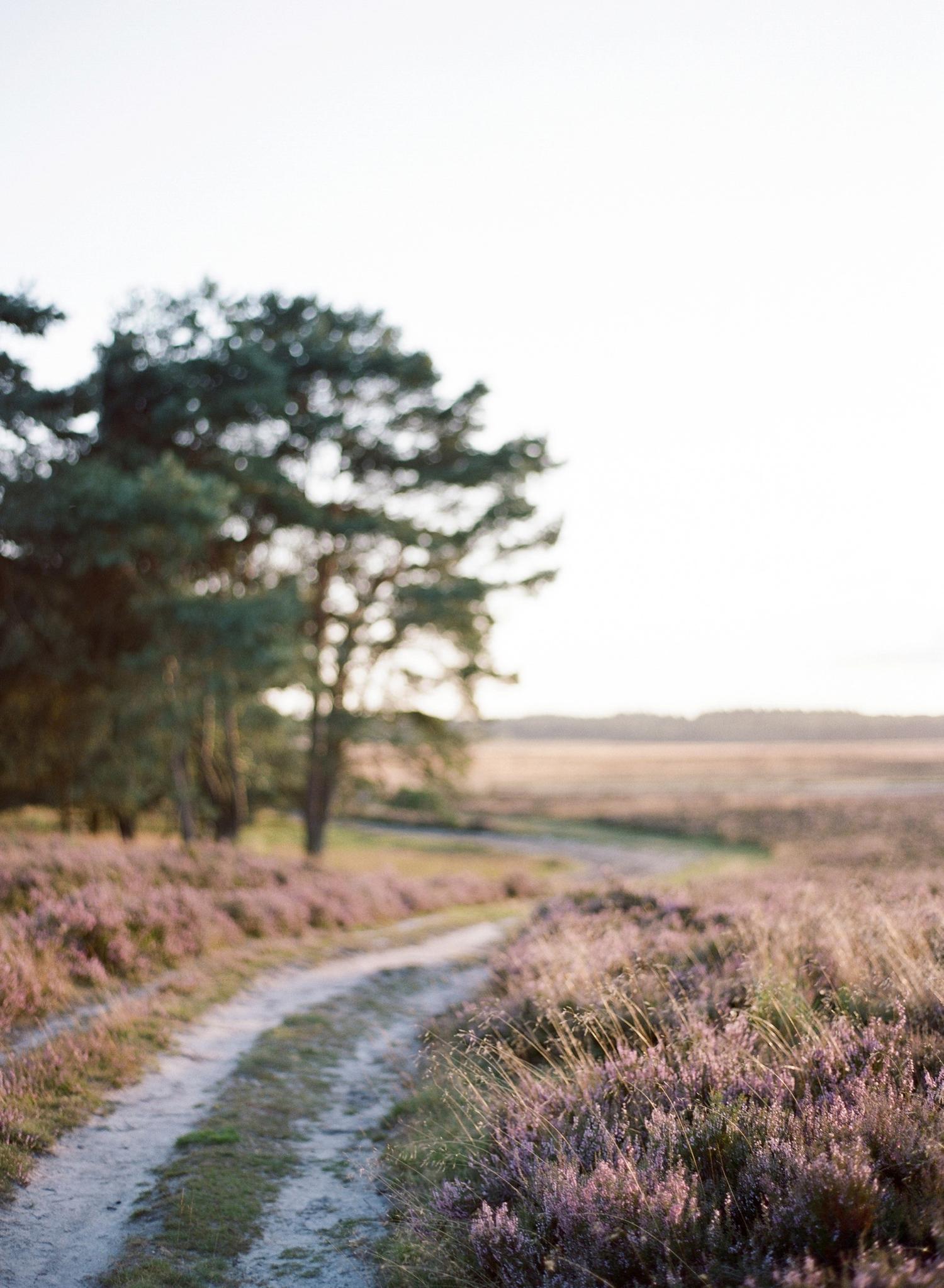 heather fields, veluwe
