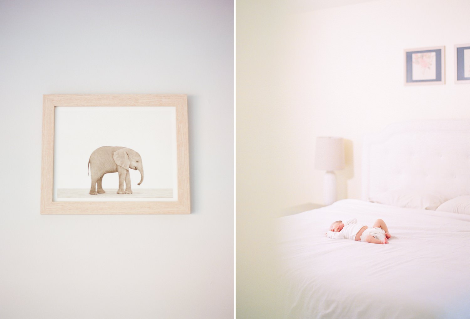 fine art film newborn photographer in washington dc